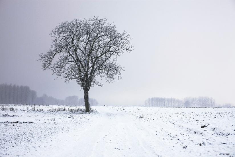 snow-effect-wordpress