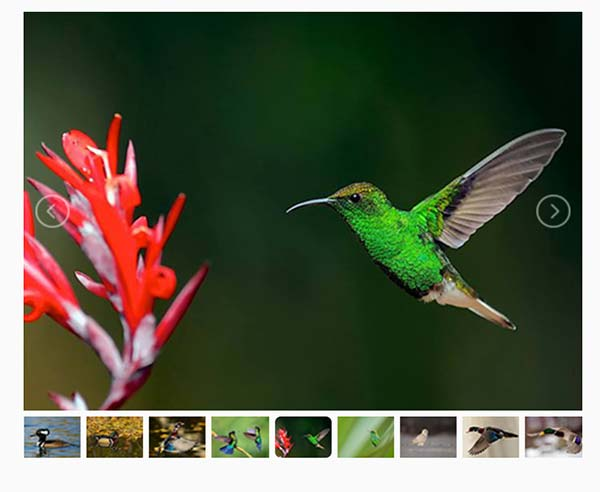 Image Carousel Thumbnail Slider with ACF Gallery Field in